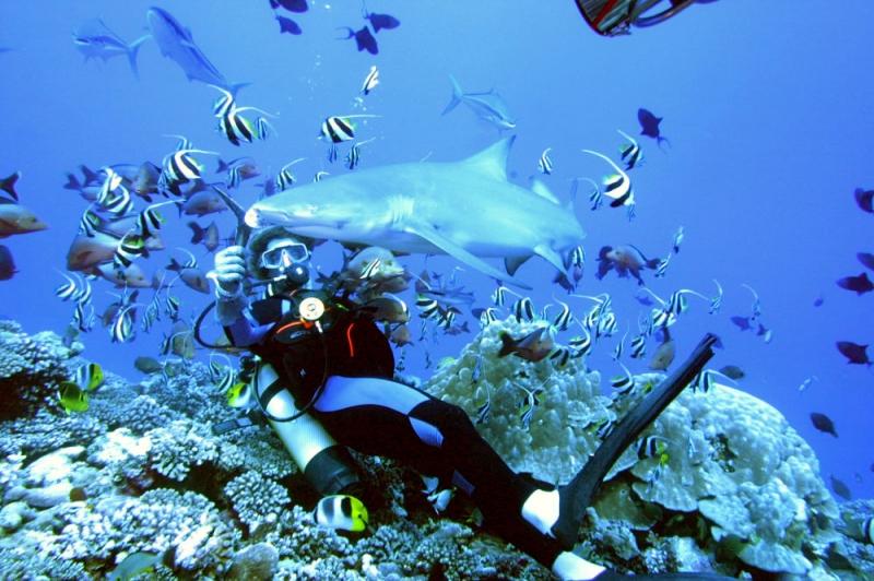 Deniz derinliklerinden ilgi çekici görüntüler