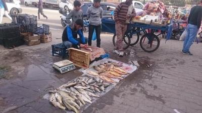 Balık bereketi…