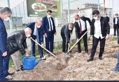 BAŞKAN GÜNEŞ FISTIK FİDESİ DİKTİ
